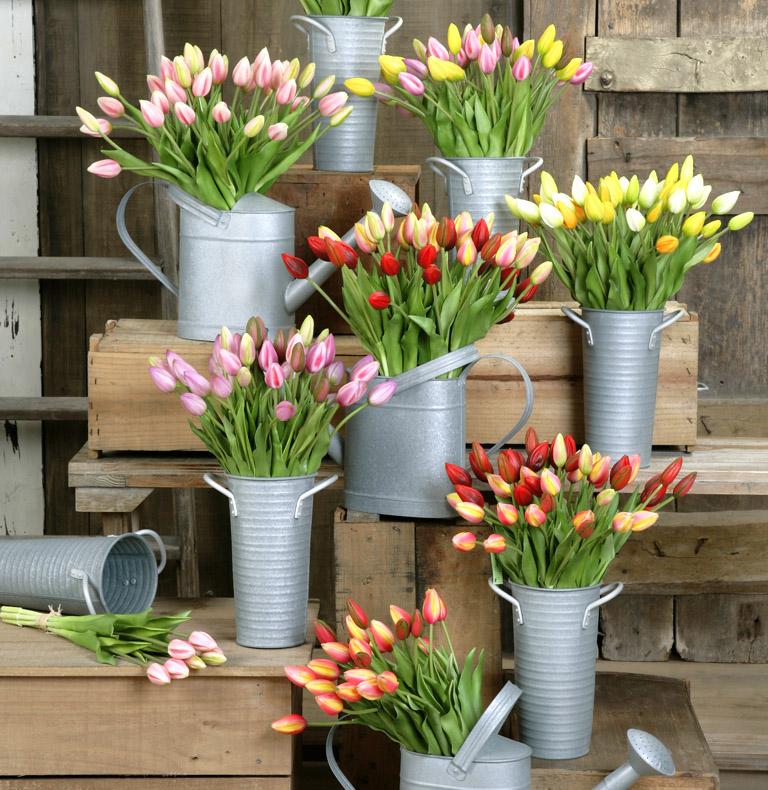 Agrupación Tulipanes
