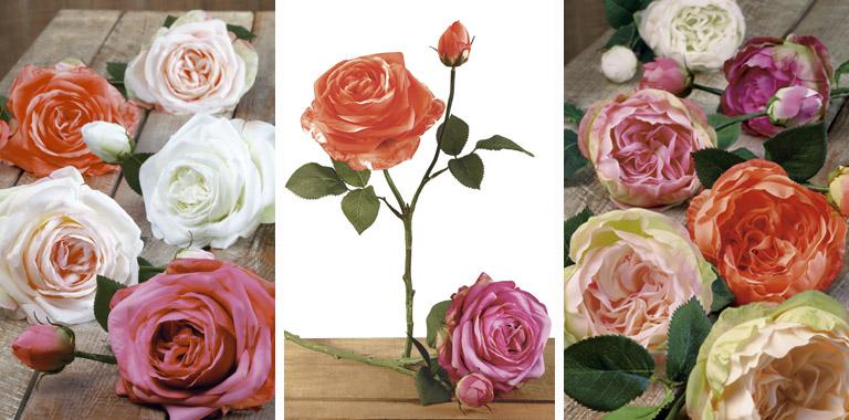 rosas tallo corto