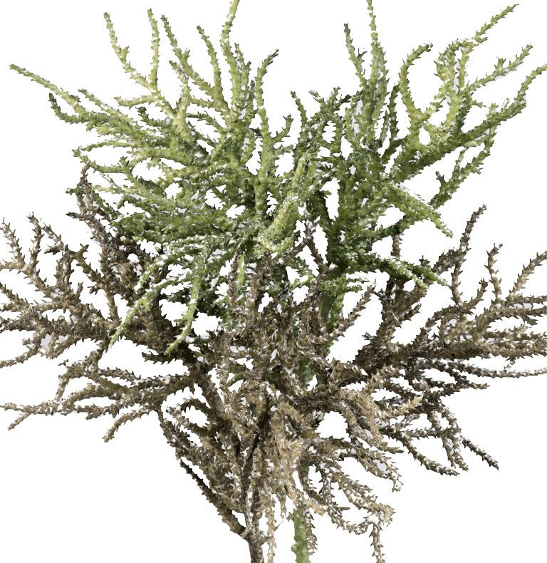 ramas y ramajes
