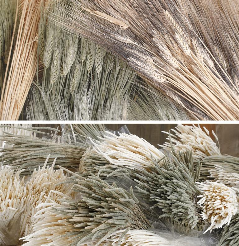 seco, artículos naturales y preservado